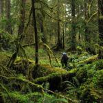 Alpinist amator se rătăcește în Carpații Occipitali