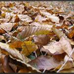Abia a venit toamna și s-au făcut deja peste un milion de poze artistice frunzelor uscate