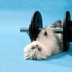 Cum să lucrezi la sală mușchiul încrederii