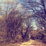 Sunete stranii în pădurea Hoia-Baciu