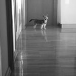 Plimbându-l pe Dobby – 22 noiembrie