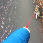 Plimbându-l pe Dobby – 23 noiembrie