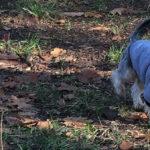 Plimbându-l pe Dobby – 12 noiembrie