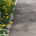 Plimbându-l pe Dobby – 18 aprilie
