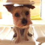 Plimbându-l pe Dobby – 10 iulie
