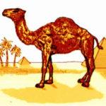 Mascota țigărilor Camel rupe tăcerea: Eu sunt de fapt un dromader