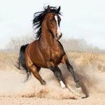 Calul din Marlboro a fost vândut unui abator de un ţăran din Letea