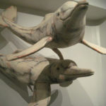 Delfinii, intelectualii tăcuți ai oceanelor