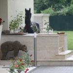 Calul de sufragerie, eterna culme a rafinamentului