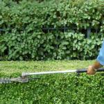 Curățenie de primăvară, dedicată exclusiv zonei pubiene