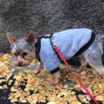 Plimbându-l pe Dobby – 29 octombrie