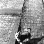 Plimbându-l pe Dobby – 3 decembrie