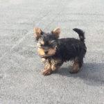 Plimbându-l pe Dobby – 22 decembrie