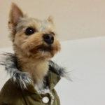 Plimbându-l pe Dobby – 24 februarie