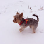 Plimbându-l pe Dobby – 12 martie