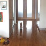 Plimbându-l pe Dobby – 4 aprilie