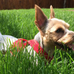 Plimbându-l pe Dobby – 1 mai