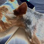 Plimbându-l pe Dobby – 14 august